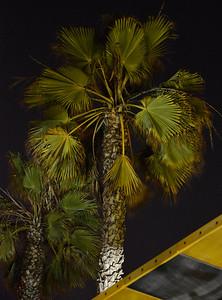 Two More Santa Monica Beach Palms