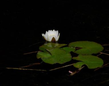 From the Norton Simon Garden Pond