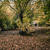 Humboldthain park leaves