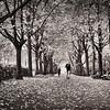 Humboldthain park joggers