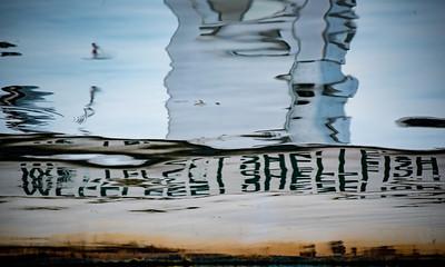 Wellfleet Shellfish 2