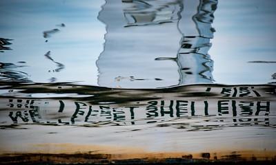 Wellfleet Shellfish 1
