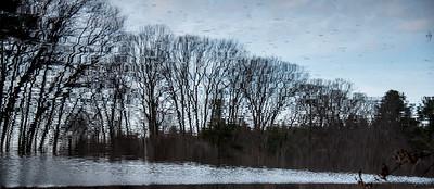 Burchard Trees 1