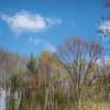Sunny Woods