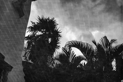 Stormy Palms 2