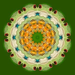 _2716b-k1_011913_172718_5DM3L frog  Kaleidoscope