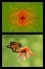 1218_072113_145313_5DM3L twirl KF mod1b butterfly twirled
