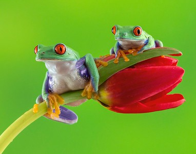 Frogscapes028_Cuchara_3840_022214_193603_5DM3L 11x14 printed