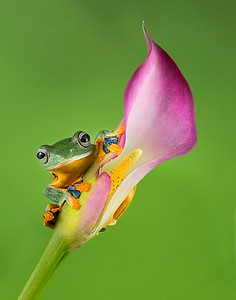 Frogscapes002_Cuchara_1740c_010115_184822_5DM3L