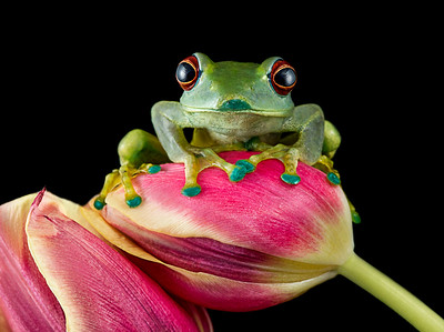 Frogscapes021_Cuchara_2999b_040715_124335_5DM3L