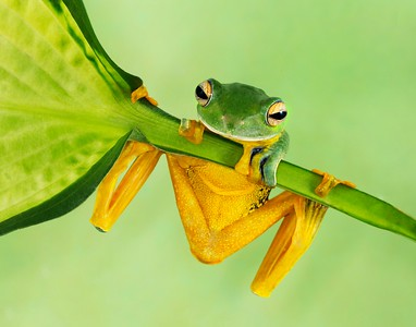 Frogscapes111_Cuchara_7946b_100714_120118_5DM3L