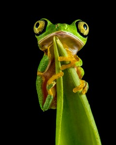 Frogscapes007_Cuchara_7006b_032017_163447_5DM3L