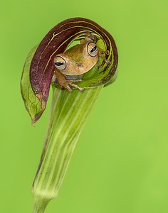 Frogscapes004_Cuchara_0138b_052614_163445_5DM3L