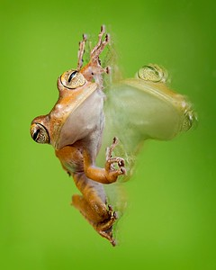 Frogscapes005_Cuchara_0310_052614_171602_5DM3L