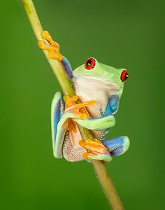 Frogscapes019_Cuchara_3370b_081312_131149_7DL