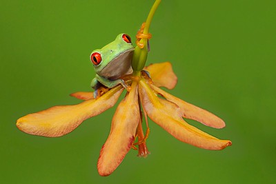 Frogscapes029_Cuchara_7699_071513_153016_5DM3L