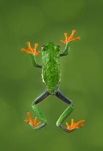 Frogscapes012_Cuchara_9813-45_121116_191328_5DM3L