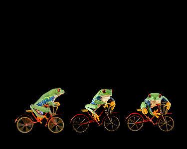 Frogscapes025_Cuchara_three red-eyed green tree frogs on bicycles AM