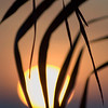 A vertical stock photo of the sun setting or rising at dusk or dawn through a silhouetted palm tree.