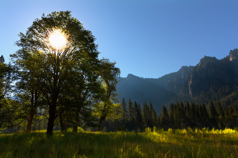 Yosemite Valley sunrise through Oak