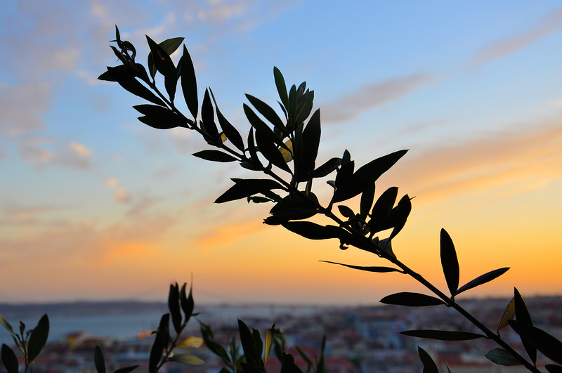 Tree branch at sunset from the Castelo de São Jorge. 2010.