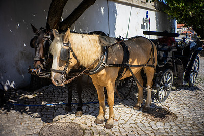 Buggy & Horses