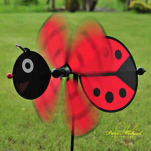Lady bug in motion