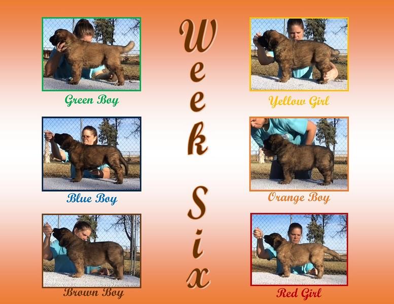 E Litter - Week 6