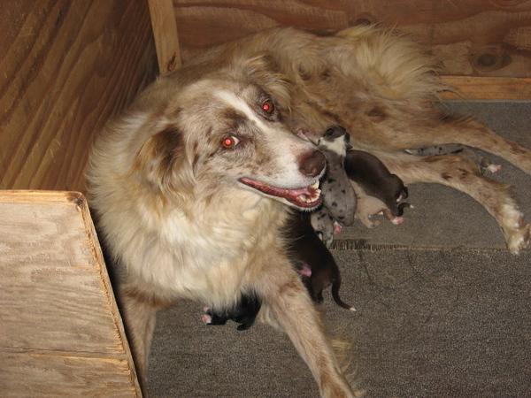x Twin Oaks Ora,s Oodo/DOB 10/3/2008