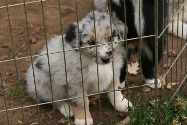 x Twin Oaks Ora's Oodo/DOB 10/3/2008