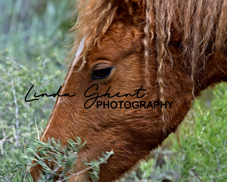 Litlle Book Cliff Curly Mare