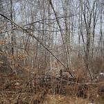 Little Massebesic early spring/mud season hike 5