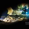 Magical cave diving darkened - Chris