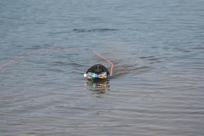 First Water Retrieve