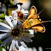 Butterflys-20161116-0063-Edit