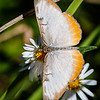 Butterflys-20161116-0074-Edit