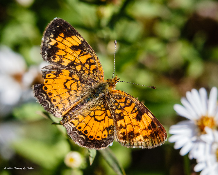 Butterflys-20161116-0004-Edit