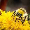 Schoolyard Bee