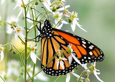 Wings in spring..