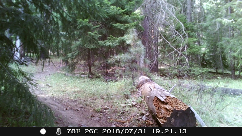 little naches scouting 2018