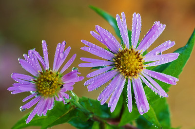 Dew Covered Wildflowers