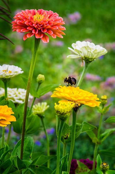 Littlefield Garden Busy Bees