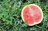 Asda Melons