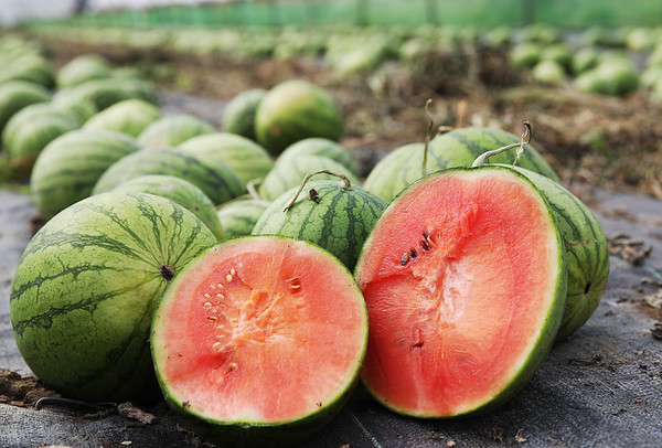 13/9/18 ASDA grows a record number of British Watermelons