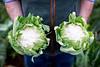 ASDA cauliflowers