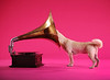 The world's first Christmas song for dogs
