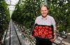 Tomatoes ASDA