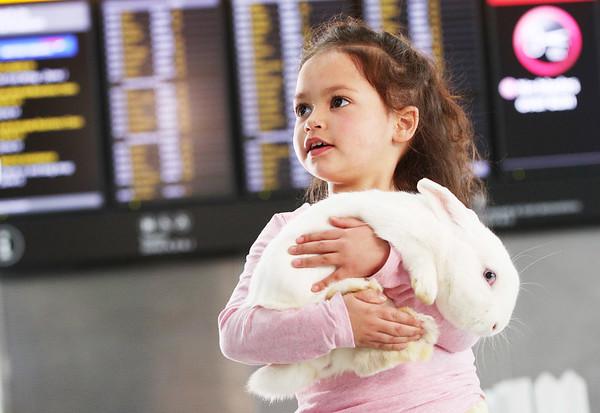 26/3/18 - Heathrow  - Bunny Cuddle Corner