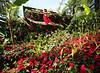BandQ Garden