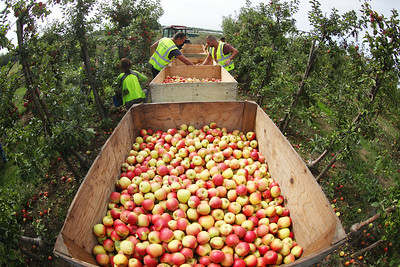 5/9/18 ASDA HARVESTS OVER SIX MILLION APPLES FOR AUTUMN THANKS TO SIZZLING SUMMER